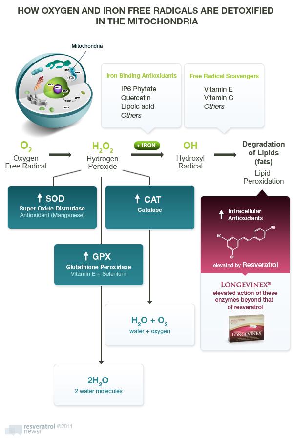 free radicals detox in mitochondria