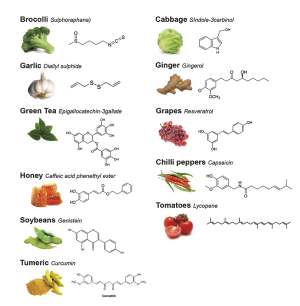 Phytochemicals; Hormetic effect