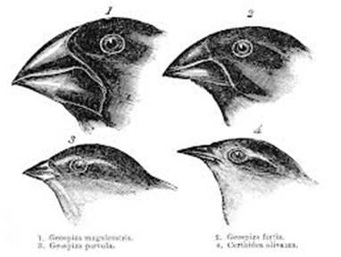 birds-mutation