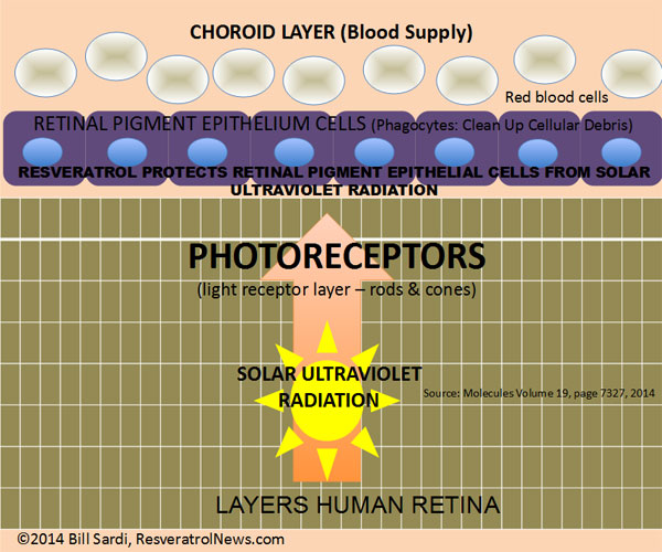 resveratrol-retina