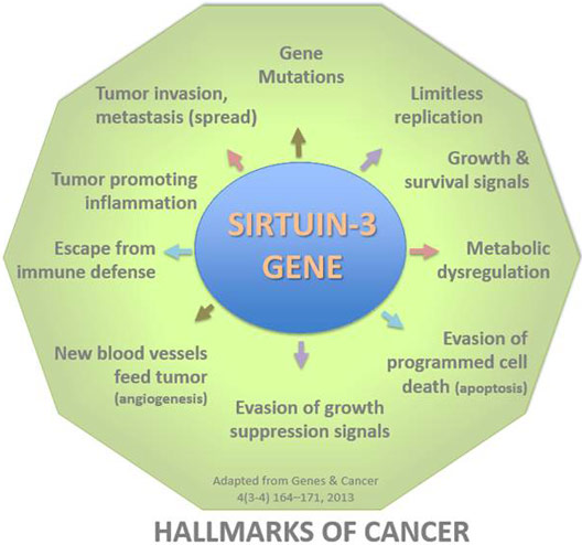 hallmarks-of-cancer