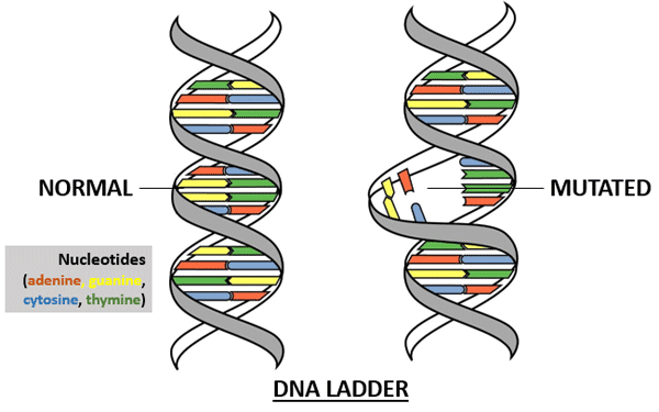 DNA ladder: normal vs mutated