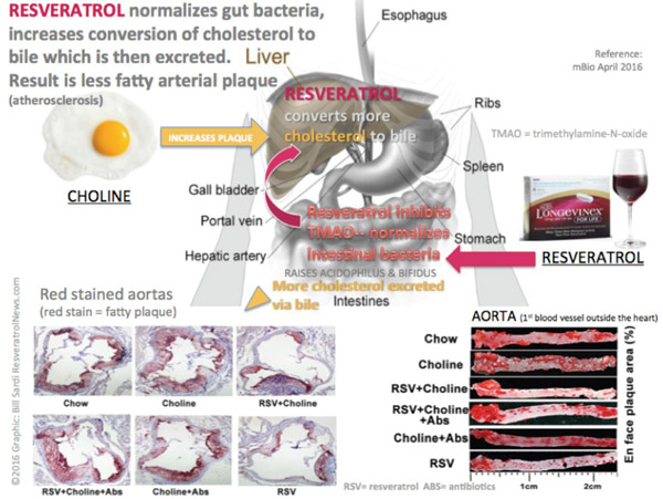 resveratrol-gut-bacteriaSM