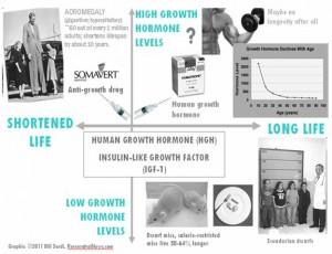 Human growth Hormone, Insulin-Like Growth Factor