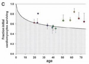 cardiomyocytes: chart