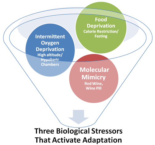 3 biological stressors